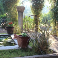 The beautiful grounds of this Indian oasis.